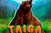 Игровой аппарат Taiga играть